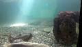 Vasca degli squali
