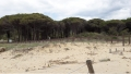 La duna